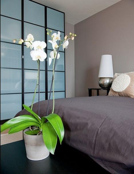 Орхидеи в интерьере спальни