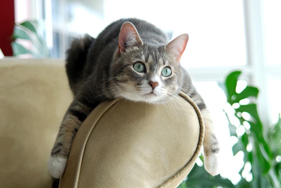 Поиск своего места кошкой в доме