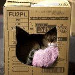 Фото 37: Домик из картонной коробки