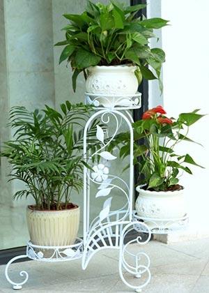 Расположение комнатных растений на цветочной подставке