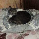 Фото 49: Лежанка- подушка для кошки с бортиками и небольшим углублением