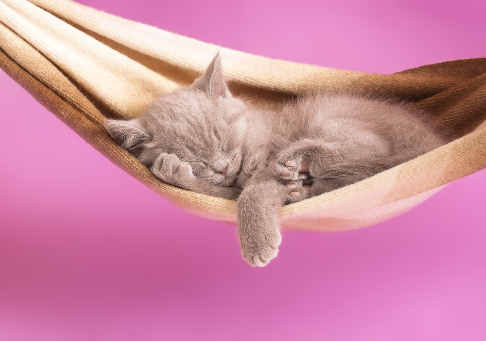 котенок в гамаке фото очки солнца обязательно