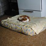 Фото 83: Подушка для кошки