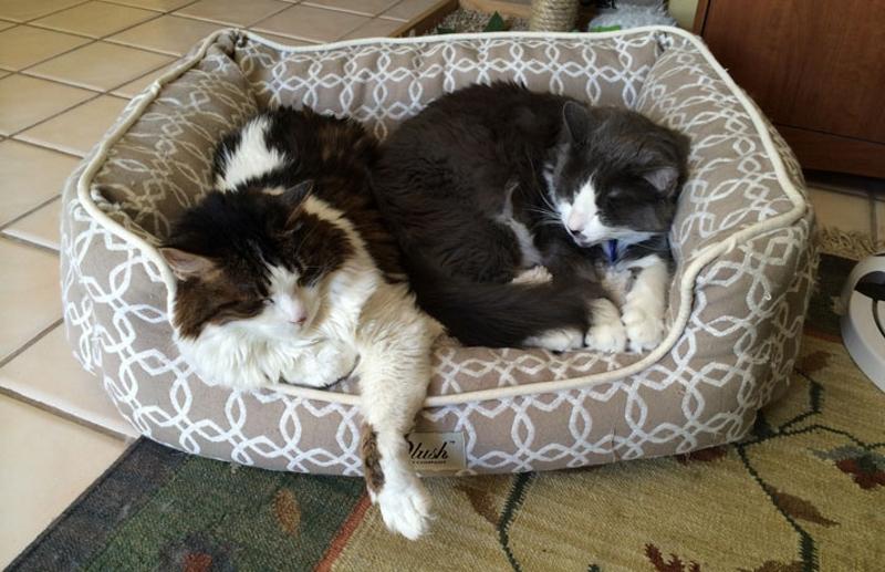 Тесное спальное место для двух кошек