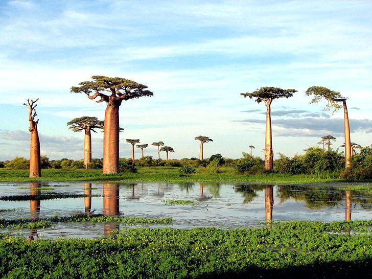 Мадагаскар считается родиной Алоэ