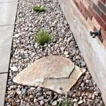 Фото 201: Фотография клумбы с мелкими камнями
