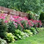 Фото 227: Цветочная клумба на даче