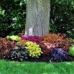 Фото 239: Клумба вокруг дерева