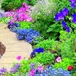 Фото 249: Клумба с яркими цветами