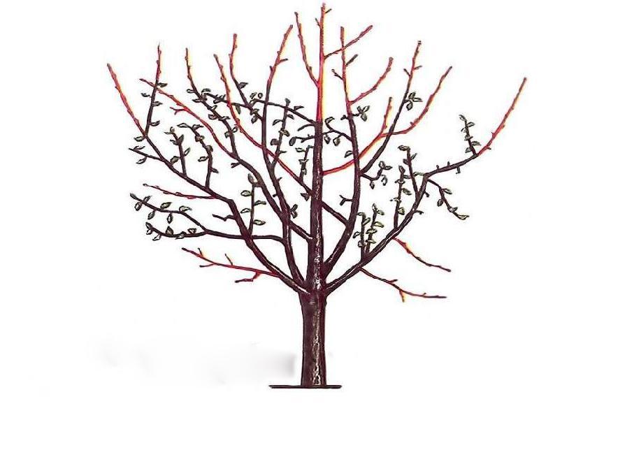 виды обрезки яблонь