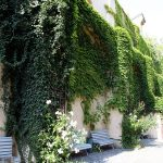 Фото 61: Оформление вьющихся растений около дома