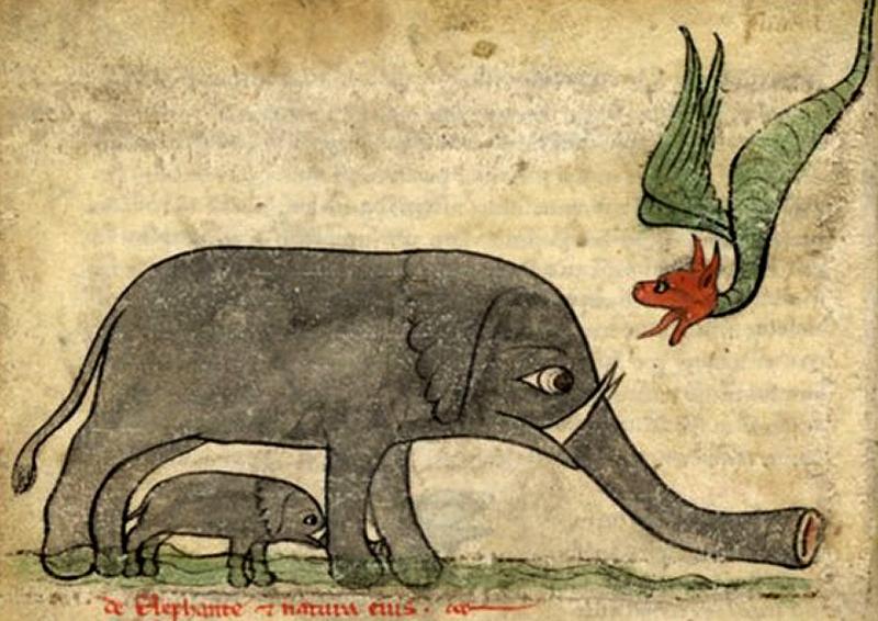 Легенда о драконе и слоне и возникновении драконьего дерева