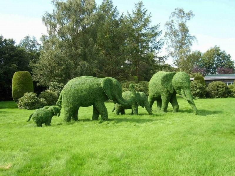 Формовка самшита в виде фигур слонов