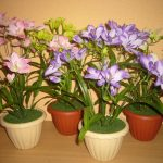 Фото 117: Фрезия фото цветов описание