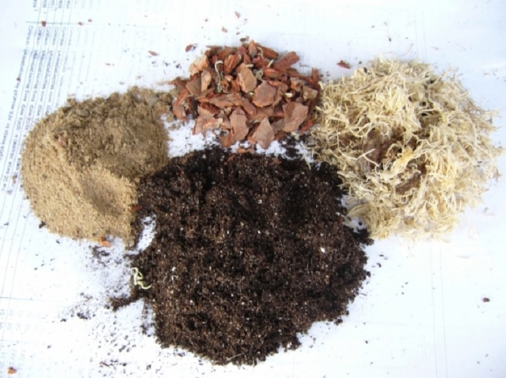Состав почвосмеси для антуриума не похож на грунт других цветов