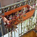 Фото 104: Традесканция на балконе