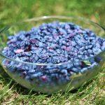 Фото 33: Синяя жимолость