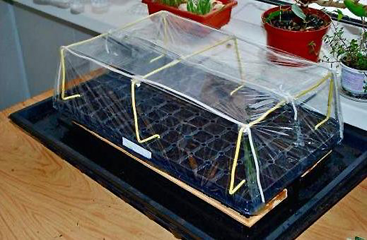 Микротепличка для выращивания рассады перца