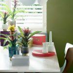 Фото 115: Цветок гузмания фото
