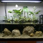 Фото 128: Спатифиллум для аквариума