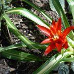 Фото 32: Гузмания Темпо в саду