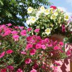 Фото 126: Многоцветковая петуния