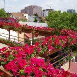 Фото 23: Оформление балкона петунией