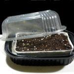 Фото 104: Выращивание рассады спатифиллума под парником