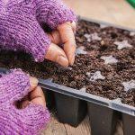 Фото 55: Посве семян лука-порея на рассаду