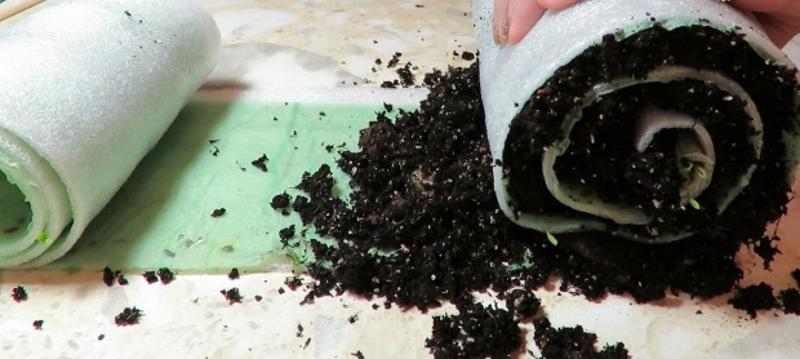 Добавление почвы на рассаду лука-порея в улитку