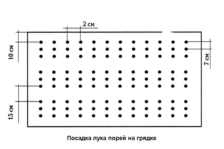 Схема посадки лука–порея многорядная