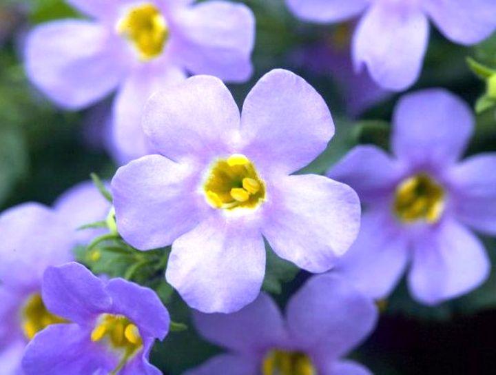 Волнообразное цветение