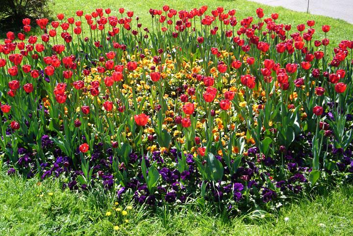 Садовые цветы, цветущие все лето