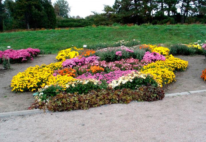 Клумба из разновысотных цветов