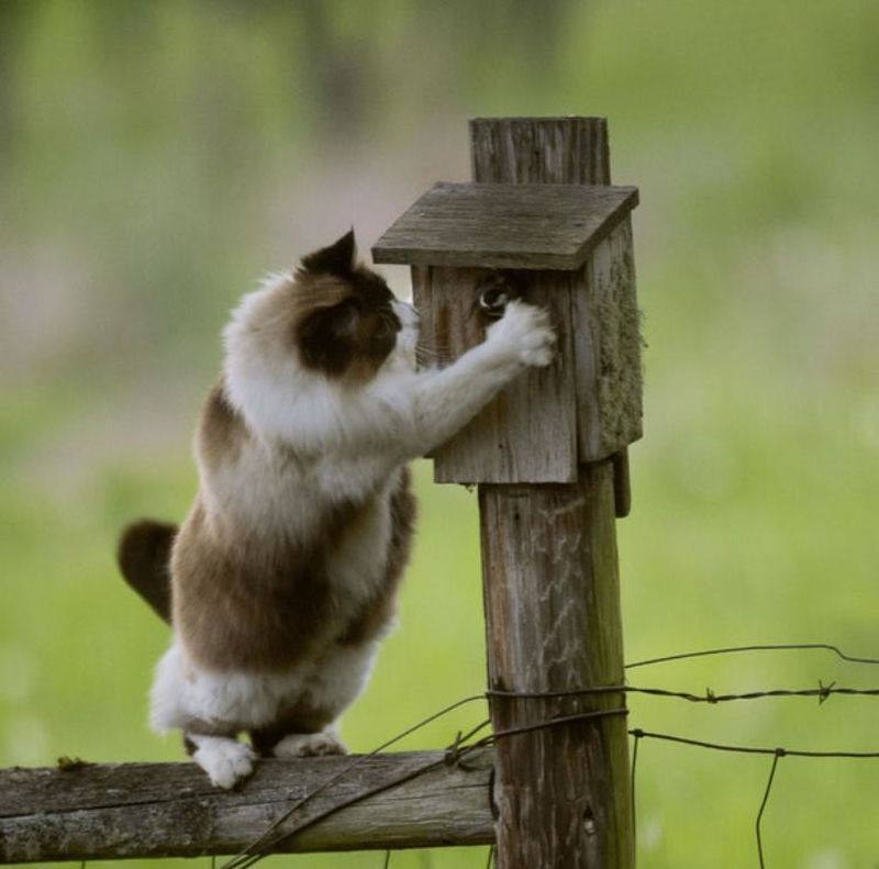 Кошачья угроза скворечнику