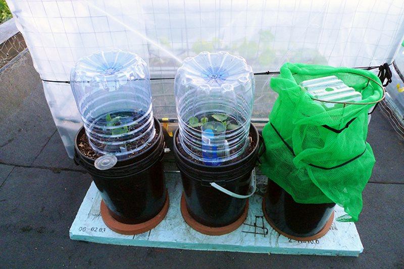 Парник для огурцов из пластиковых бутылок