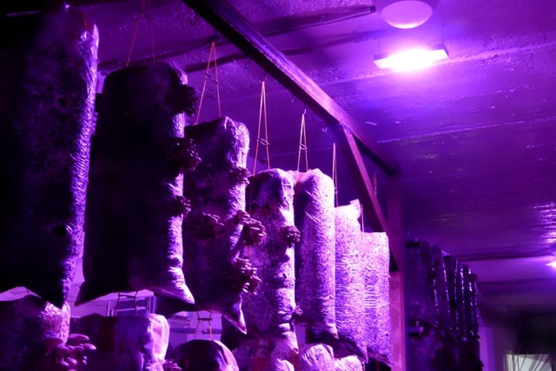 Освещение для выращивания грибов