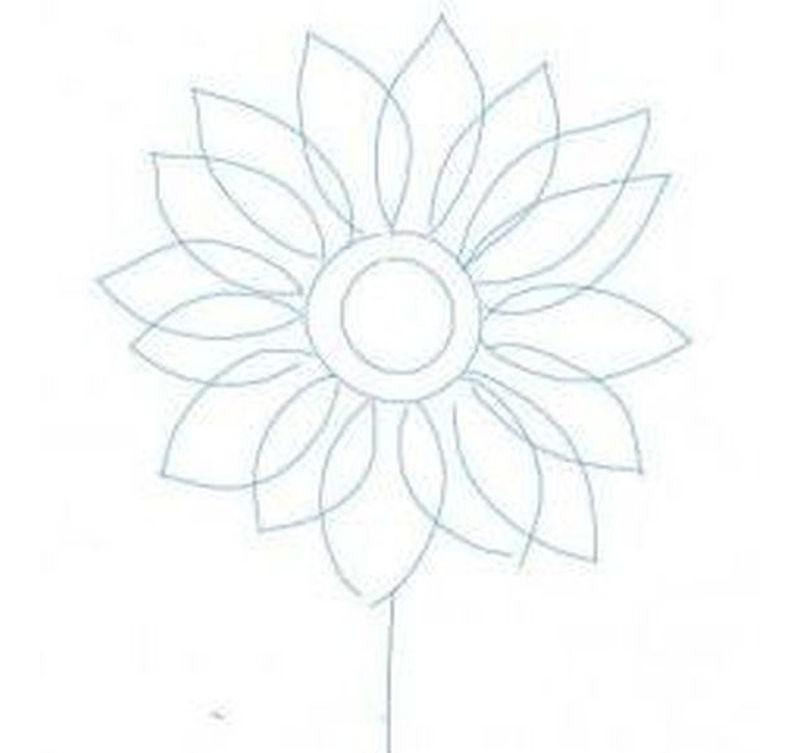 Будущий стебель цветка