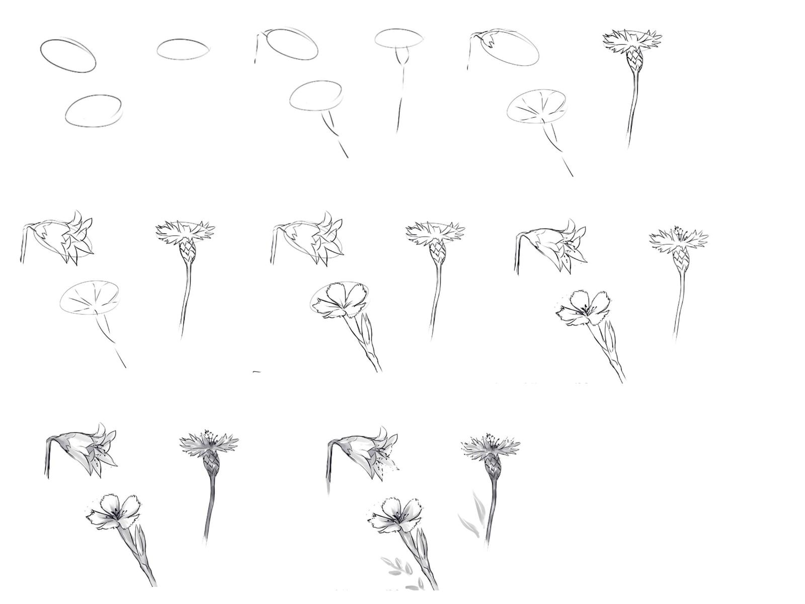 Рисование полевых цветов своими руками