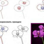 Фото 72: Этапы рисованиорхидей
