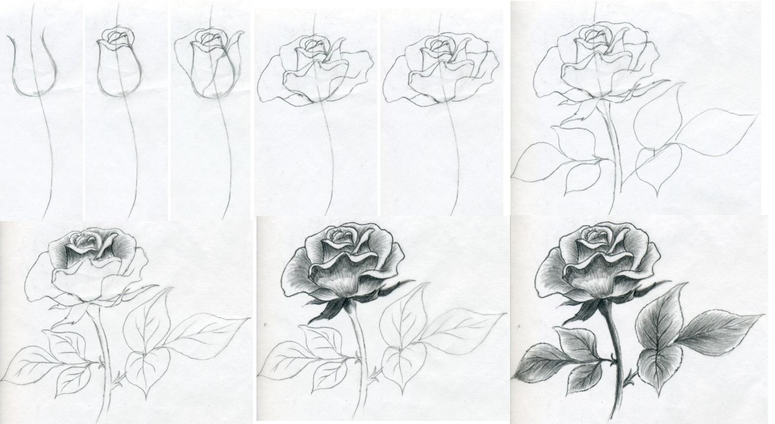 Рисование пышной розы своими руками