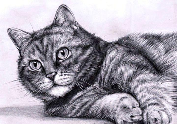 Кошка, нарисованная карандашом