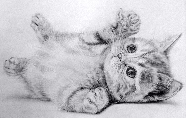 Котенок в движении нарисованный карандашом