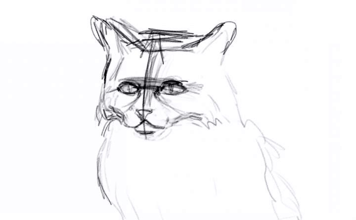 Разметка черт мордочки кошки