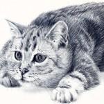 Фото 28: Красивый рисунок кошки