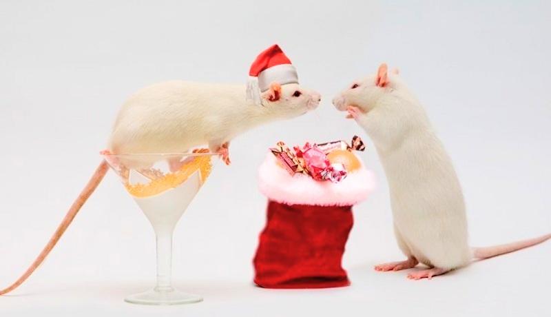 Белая Крыса — символ 2020 Года