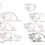 Фото 31: Енотовидная кошка поэтапно