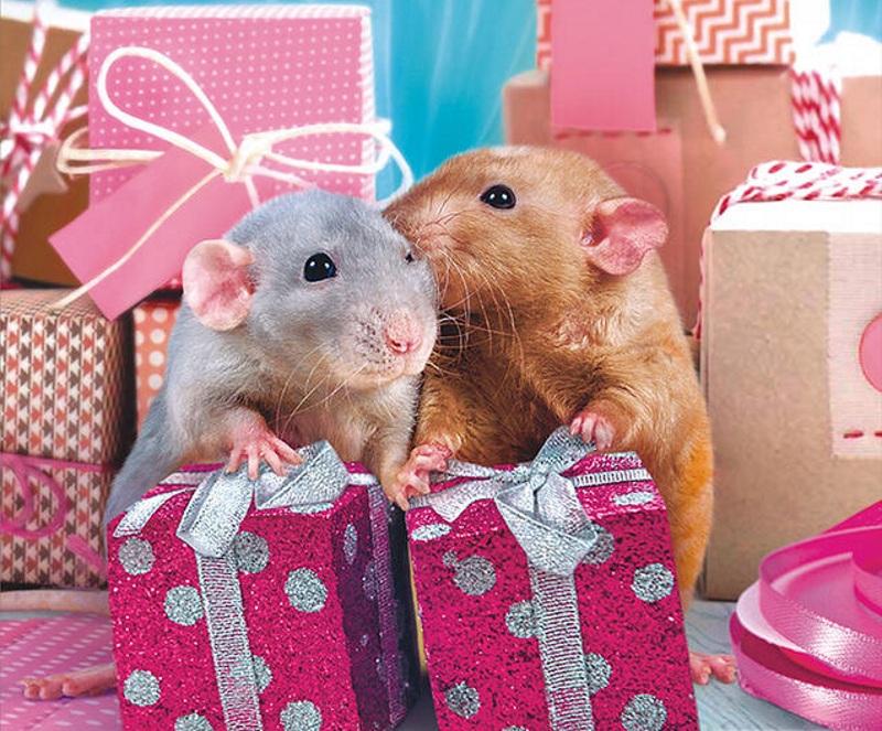 Новогодняя упаковка к Году Крысы
