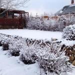 Фото 16: Зима и спирея Японская
