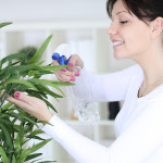 Фото 10: Опрыскивание листьев комнатного плюща